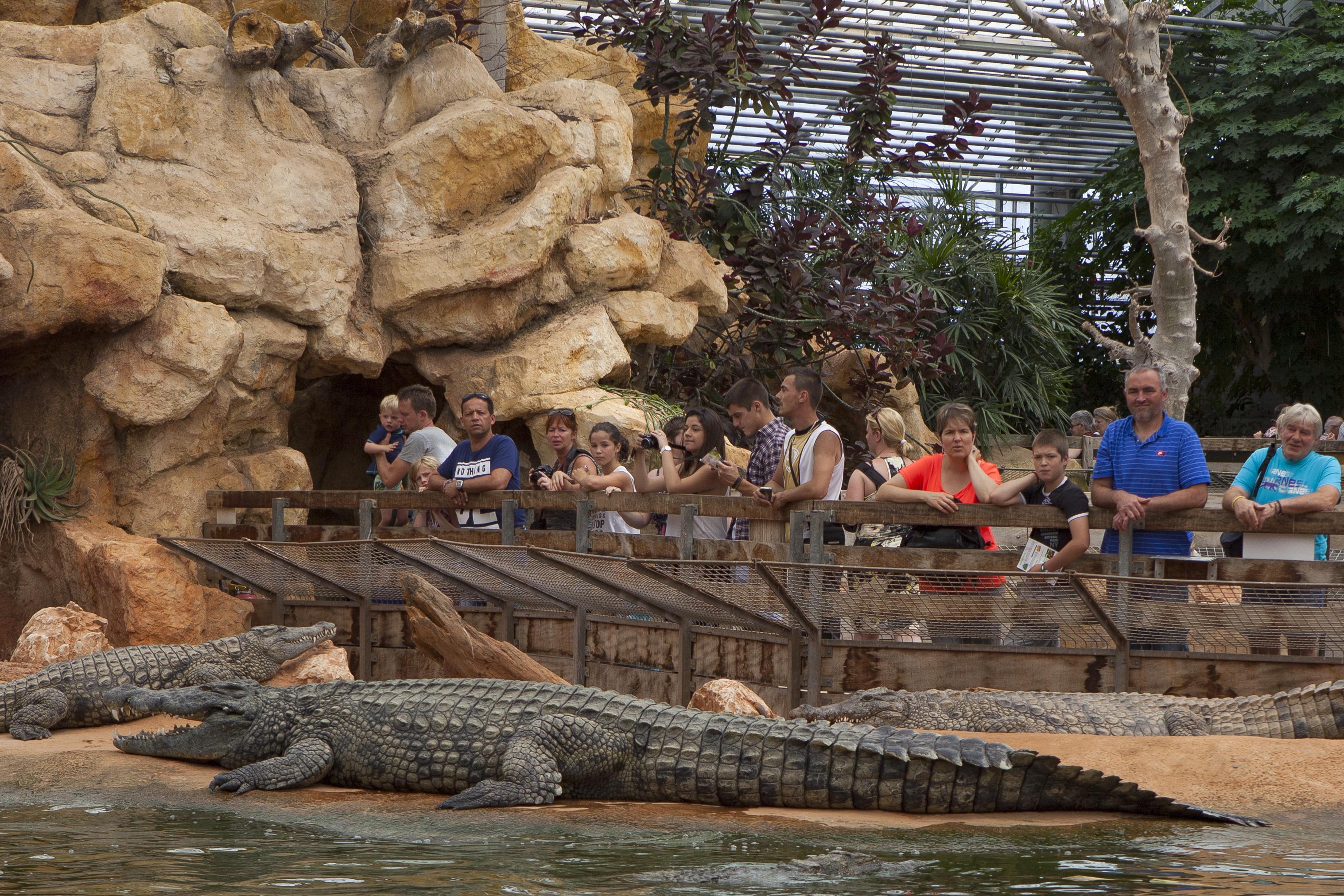 La sortie en famille idéale ! - Ferme aux crocodiles